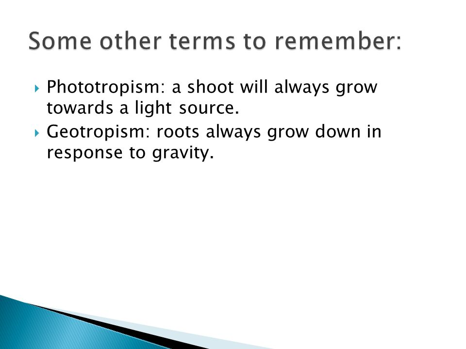  Phototropism: a shoot will always grow towards a light source.