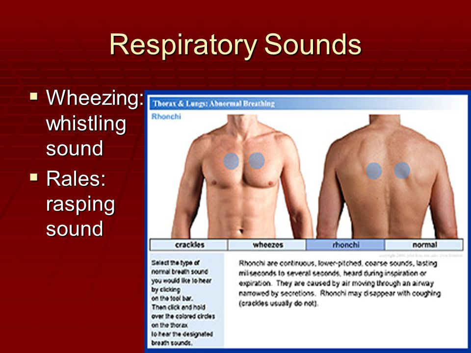 Respiratory Sounds  Wheezing: whistling sound  Rales: rasping sound