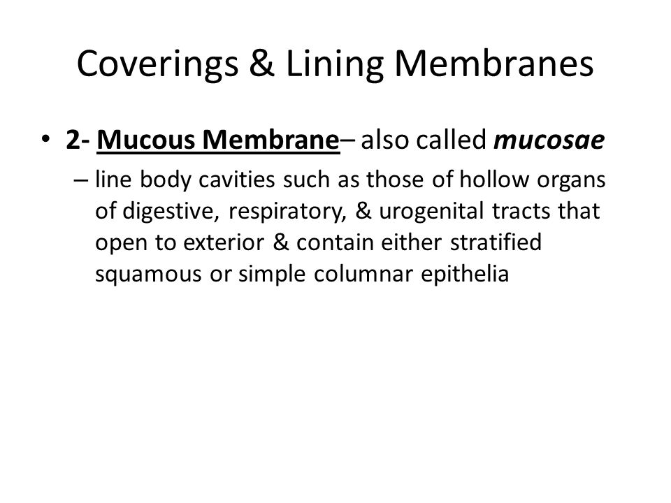Coverings & Lining Membranes 2- Mucous Membrane– also called mucosae – line body cavities such as those of hollow organs of digestive, respiratory, & urogenital tracts that open to exterior & contain either stratified squamous or simple columnar epithelia