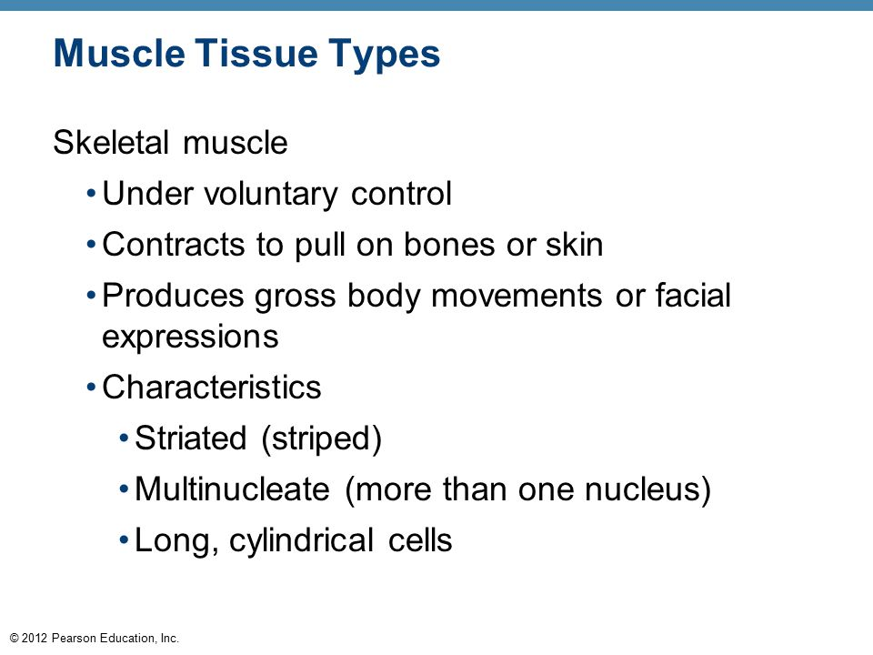 © 2012 Pearson Education, Inc. Muscle Tissue Types Skeletal muscle Under voluntary control Contracts to pull on bones or skin Produces gross body move