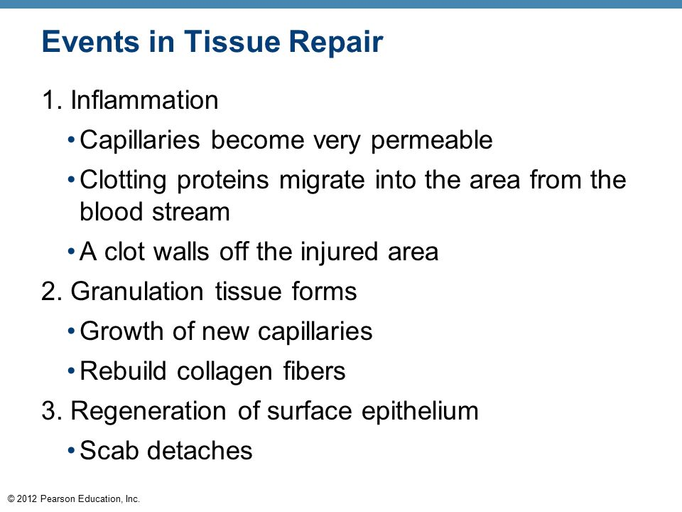 © 2012 Pearson Education, Inc. Events in Tissue Repair 1. Inflammation Capillaries become very permeable Clotting proteins migrate into the area from
