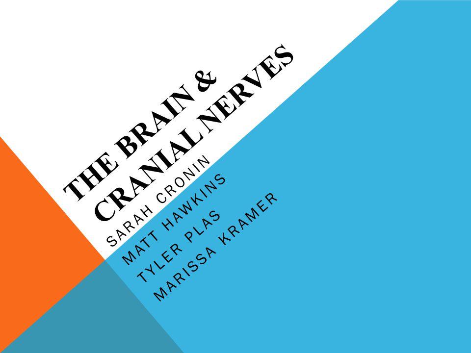 THE BRAIN & CRANIAL NERVES SARAH CRONIN MATT HAWKINS TYLER PLAS MARISSA KRAMER