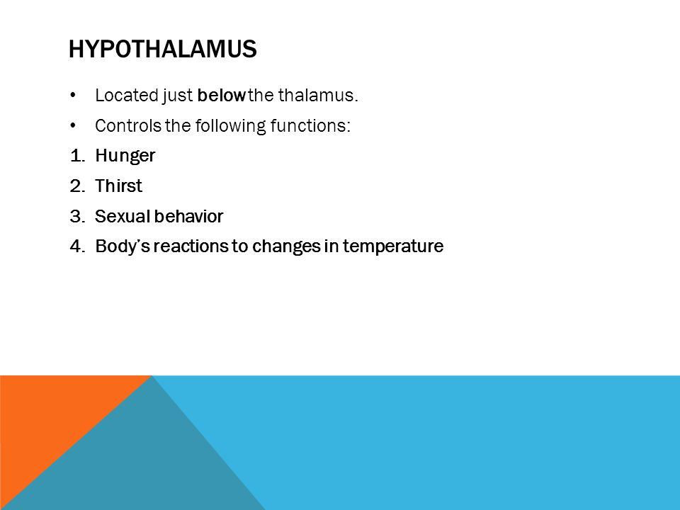 HYPOTHALAMUS Located just below the thalamus. Controls the following functions: 1.Hunger 2.Thirst 3.Sexual behavior 4.Body's reactions to changes in t