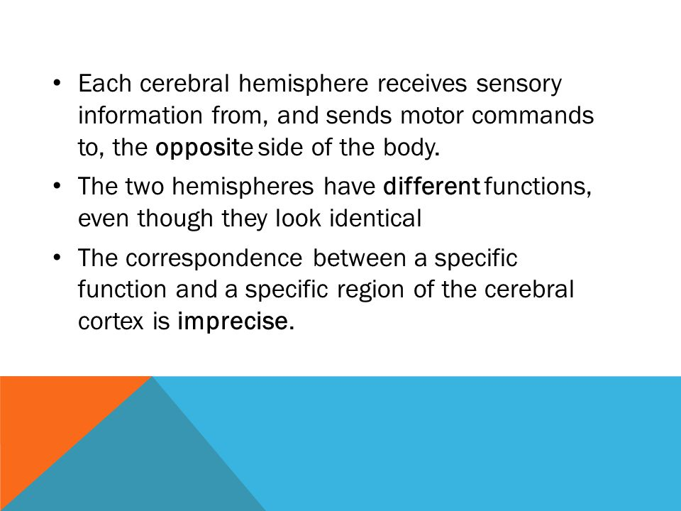Each cerebral hemisphere receives sensory information from, and sends motor commands to, the opposite side of the body. The two hemispheres have diffe