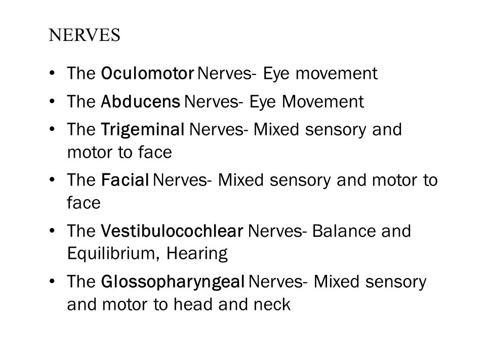 NERVES The Oculomotor Nerves- Eye movement The Abducens Nerves- Eye Movement The Trigeminal Nerves- Mixed sensory and motor to face The Facial Nerves-