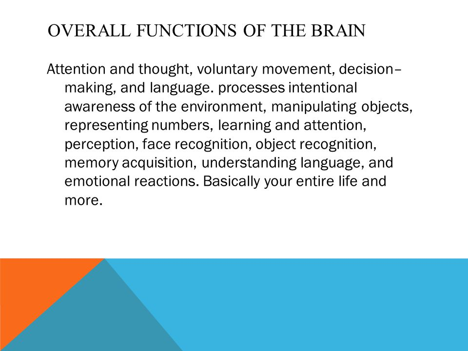 OVERALL FUNCTIONS OF THE BRAIN Attention and thought, voluntary movement, decision– making, and language. processes intentional awareness of the envir