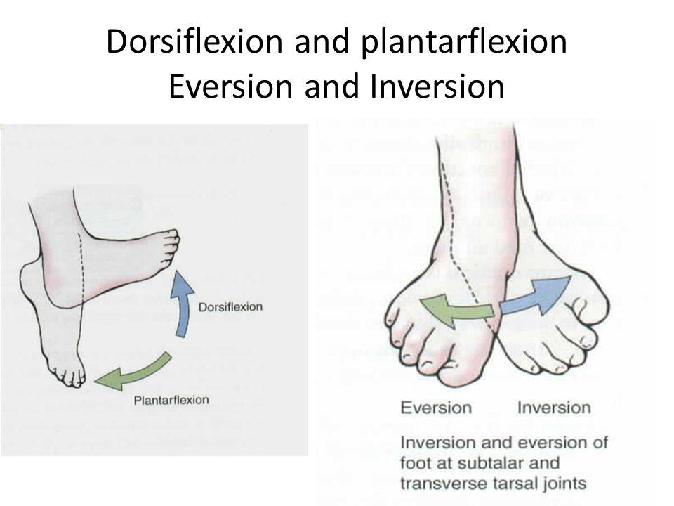 Dorsiflexion and plantarflexion Eversion and Inversion