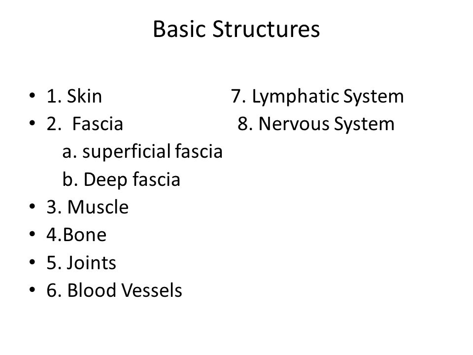 Basic Structures 1. Skin 7. Lymphatic System 2. Fascia 8.