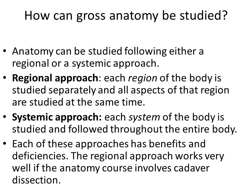 How can gross anatomy be studied.