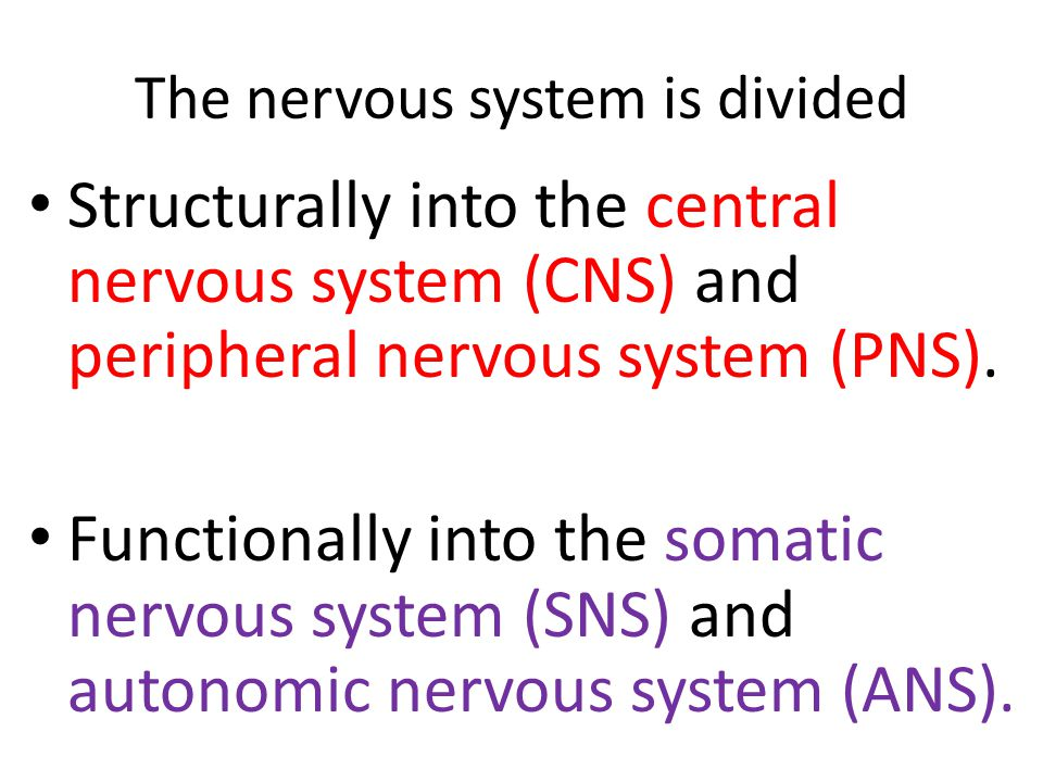The nervous system is divided Structurally into the central nervous system (CNS) and peripheral nervous system (PNS).