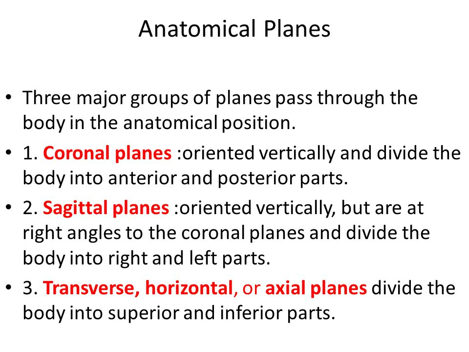 Anatomical Planes Three major groups of planes pass through the body in the anatomical position.