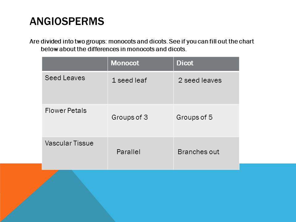 ANGIOSPERMS Are divided into two groups: monocots and dicots.