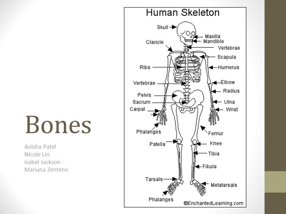 Bones Anisha Patel Nicole Lin Isabel Jackson Mariana Zenteno