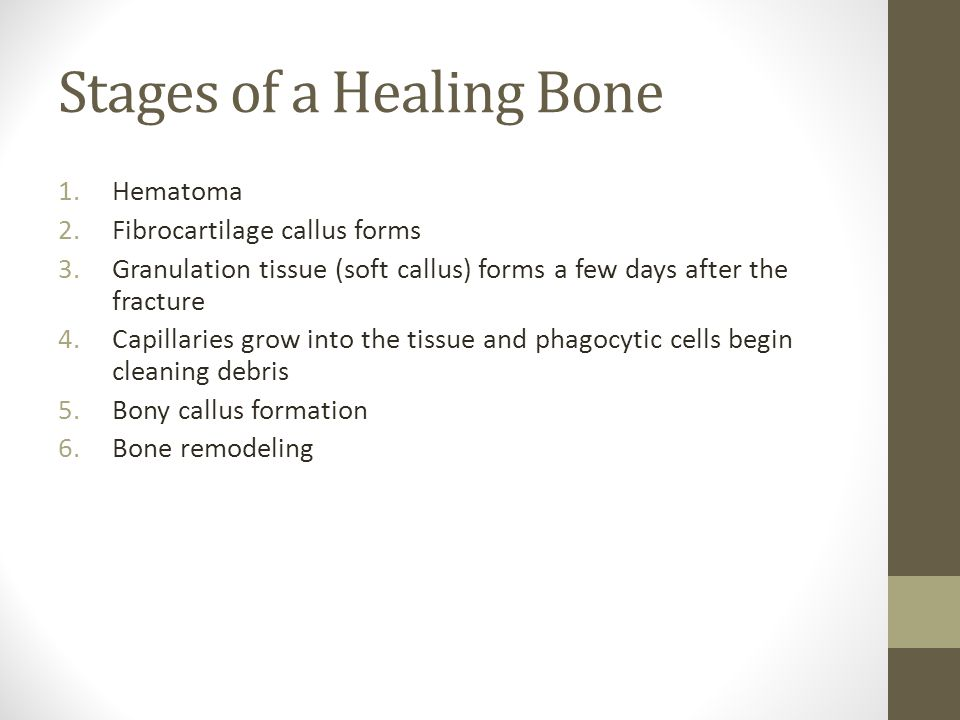 Stages of a Healing Bone 1.Hematoma 2.Fibrocartilage callus forms 3.Granulation tissue (soft callus) forms a few days after the fracture 4.Capillaries grow into the tissue and phagocytic cells begin cleaning debris 5.Bony callus formation 6.Bone remodeling