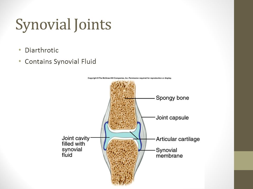 Synovial Joints Diarthrotic Contains Synovial Fluid