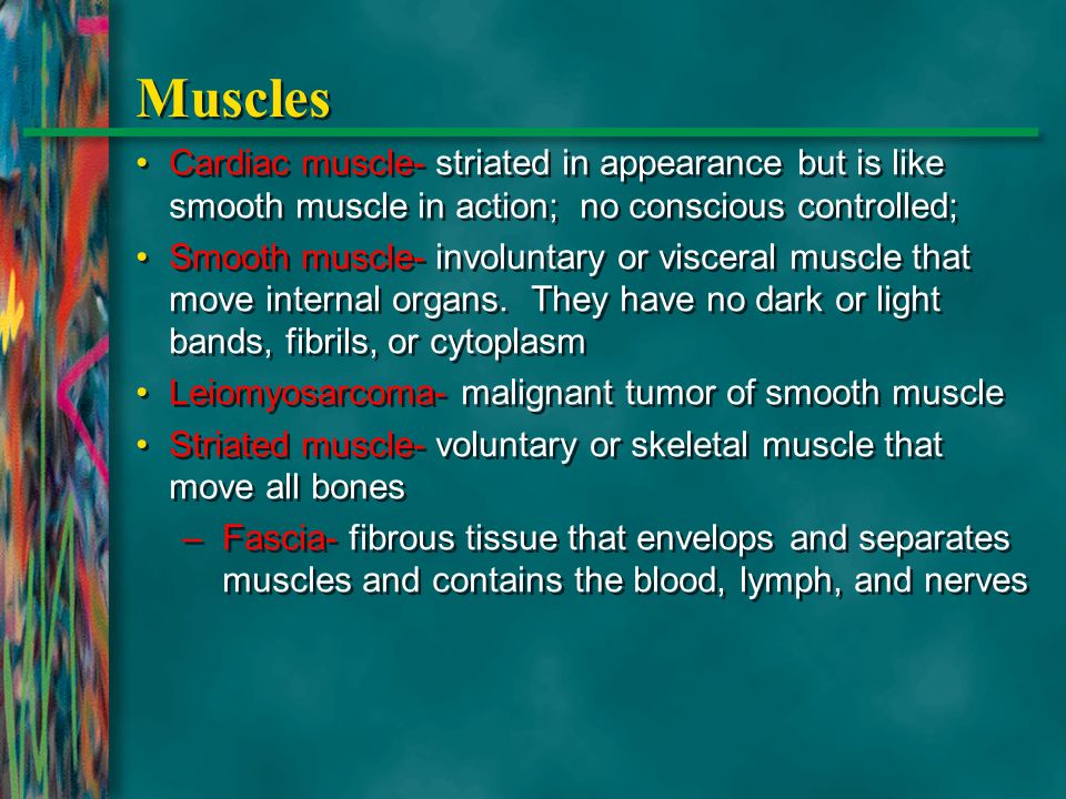 Muscles Cardiac muscle- striated in appearance but is like smooth muscle in action; no conscious controlled; Smooth muscle- involuntary or visceral mu
