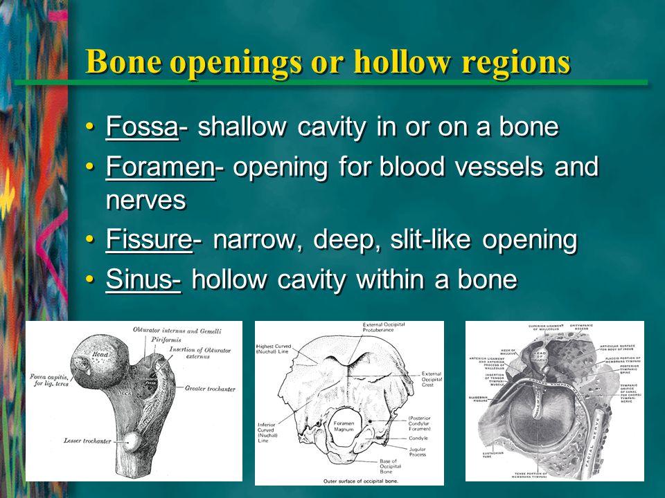 Pelvic Bones Pelvic girdle – pelvis; collection of bones composed of: ilium ischium pubis *Pubic Symphysis- Anterior part of pelvis where cartilage connects Pelvic girdle – pelvis; collection of bones composed of: ilium ischium pubis *Pubic Symphysis- Anterior part of pelvis where cartilage connects