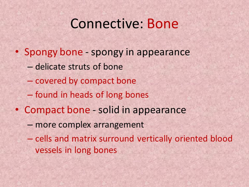 Connective: Bone Spongy bone - spongy in appearance – delicate struts of bone – covered by compact bone – found in heads of long bones Compact bone -