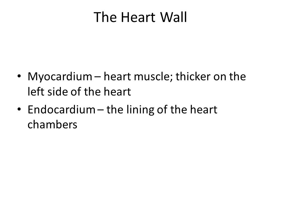The Heart Wall Myocardium – heart muscle; thicker on the left side of the heart Endocardium – the lining of the heart chambers