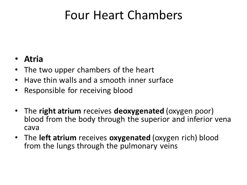 Four Heart Chambers Atria The two upper chambers of the heart Have thin walls and a smooth inner surface Responsible for receiving blood The right atrium receives deoxygenated (oxygen poor) blood from the body through the superior and inferior vena cava The left atrium receives oxygenated (oxygen rich) blood from the lungs through the pulmonary veins