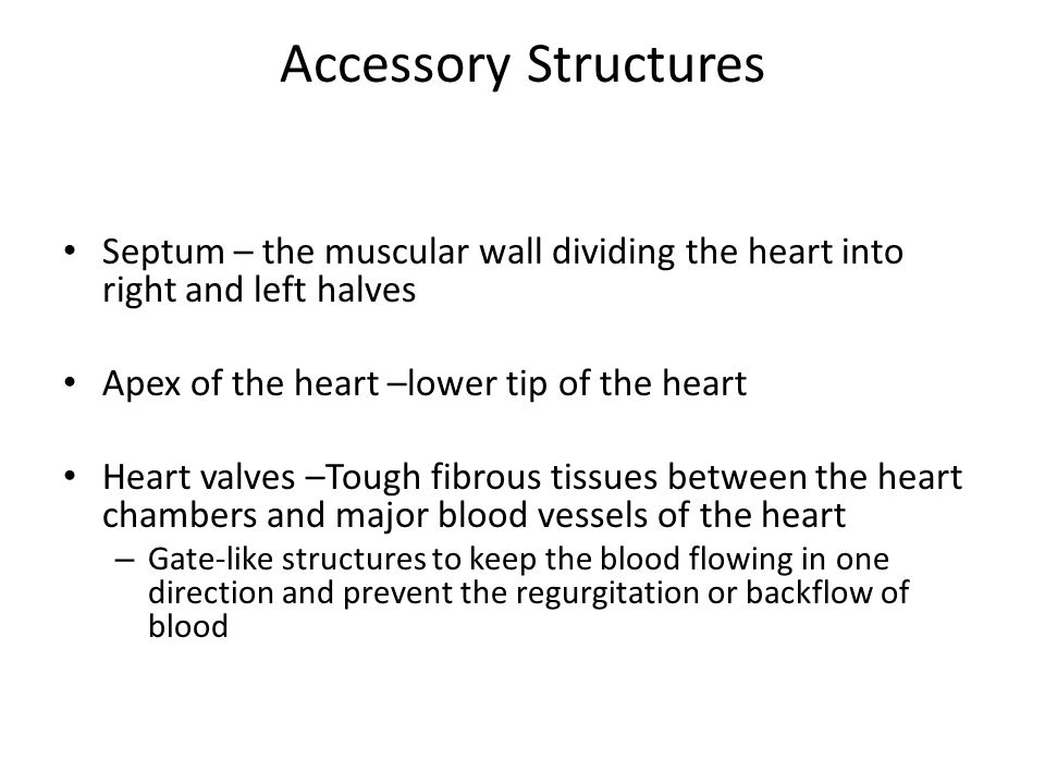 Valves (Figure 5.3) Atrioventricular valves – when ventricles contract, blood is forced upward and the valves close.