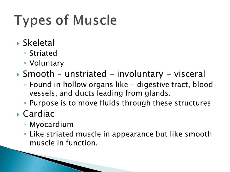  Skeletal ◦ Striated ◦ Voluntary  Smooth – unstriated – involuntary - visceral ◦ Found in hollow organs like - digestive tract, blood vessels, and d