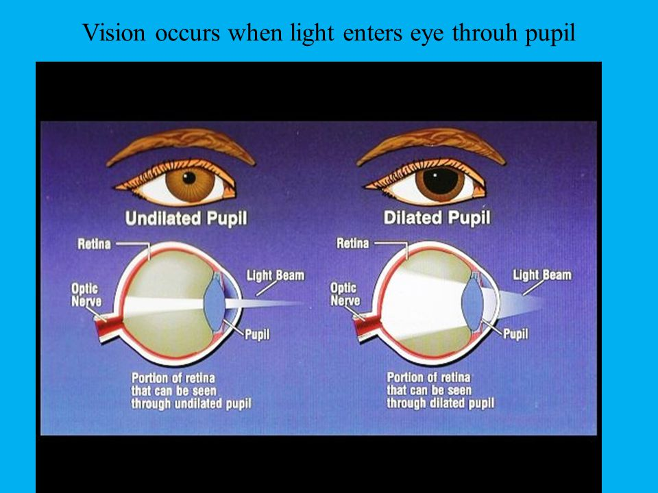 Vision occurs when light enters eye throuh pupil