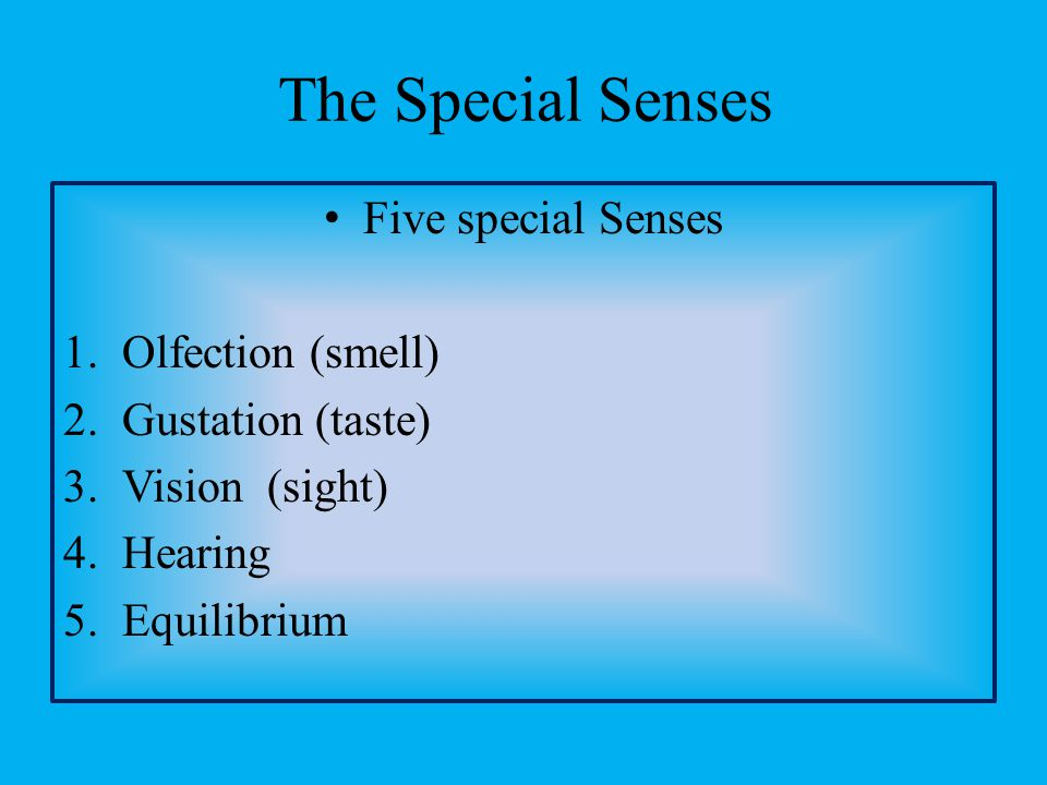Five special Senses 1.Olfection (smell) 2.Gustation (taste) 3.Vision (sight) 4.Hearing 5.Equilibrium