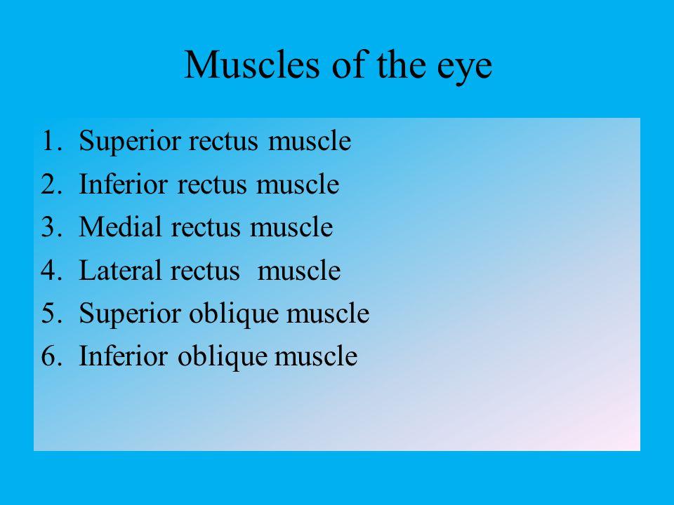 Optic chiasma