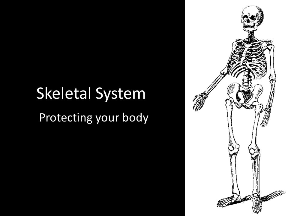 Skeletal System Protecting your body
