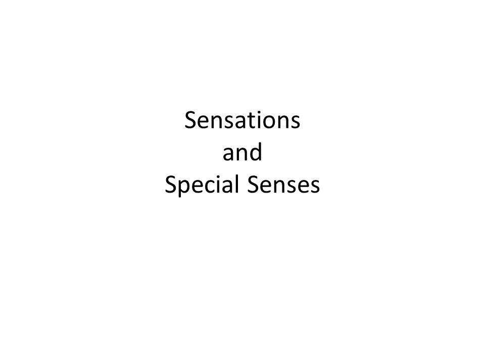 Sensations and Special Senses