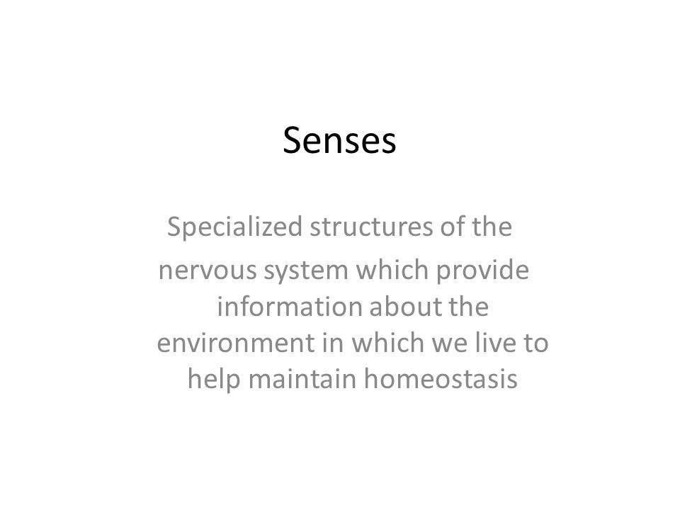 Senses Specialized structures of the nervous system which provide information about the environment in which we live to help maintain homeostasis