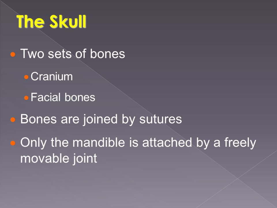 The Skull  Two sets of bones  Cranium  Facial bones  Bones are joined by sutures  Only the mandible is attached by a freely movable joint