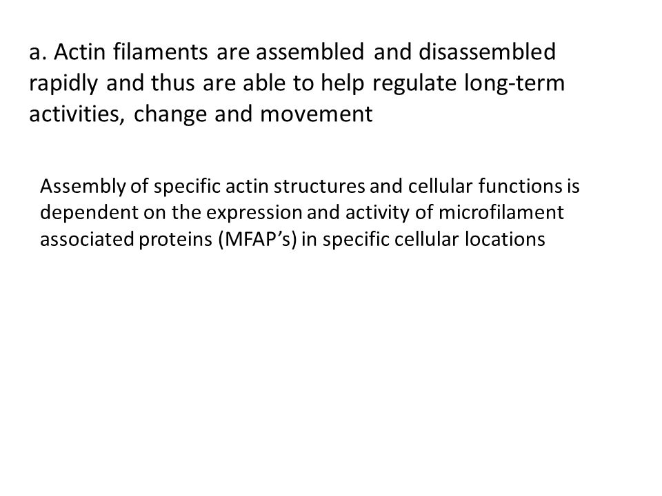 a. Actin filaments are assembled and disassembled rapidly and thus are able to help regulate long-term activities, change and movement Assembly of spe