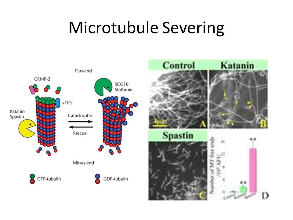 Microtubule Severing
