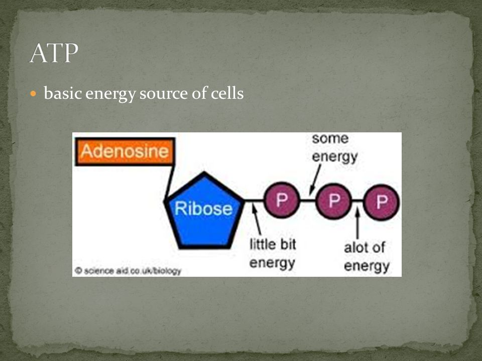 basic energy source of cells
