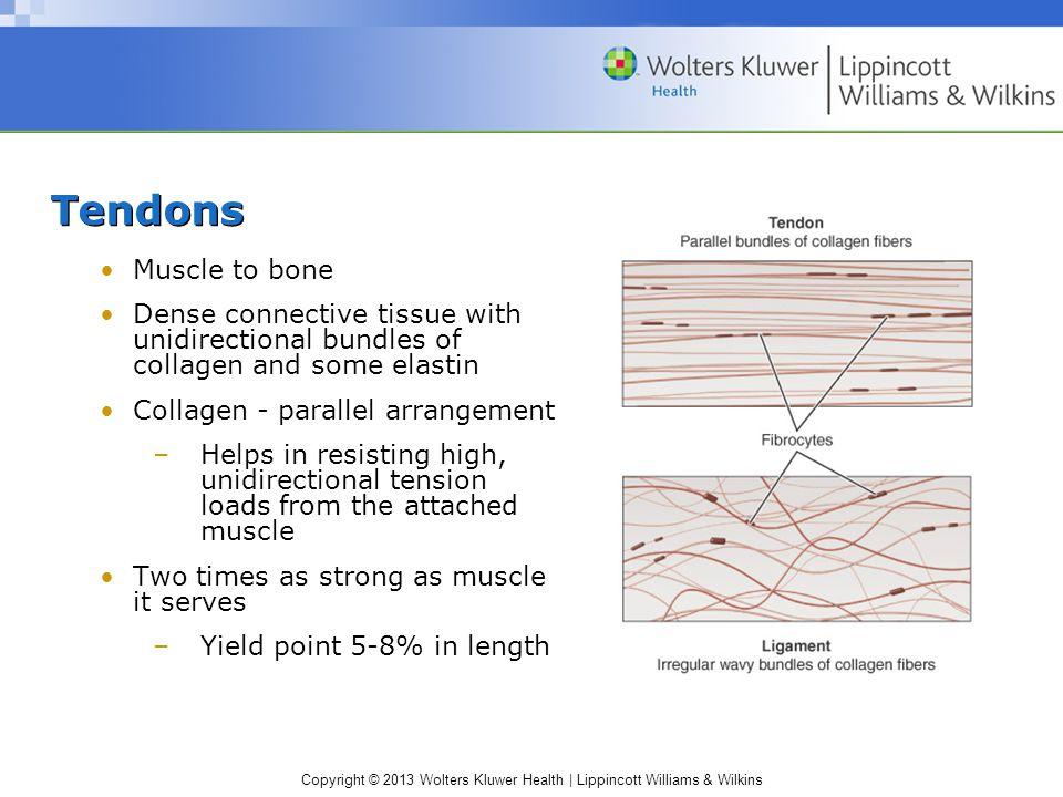 Copyright © 2013 Wolters Kluwer Health | Lippincott Williams & Wilkins Skin Epidermis Dermis –Multidirectional arrangement of collagen