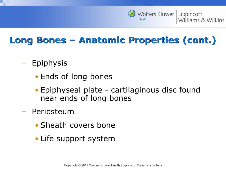 Copyright © 2013 Wolters Kluwer Health | Lippincott Williams & Wilkins Long Bones – Anatomic Properties Primary constituents: minerals, collagen, water Components –Diaphysis Shaft - hollow, cylindrical Medullary cavity - shock potential improves