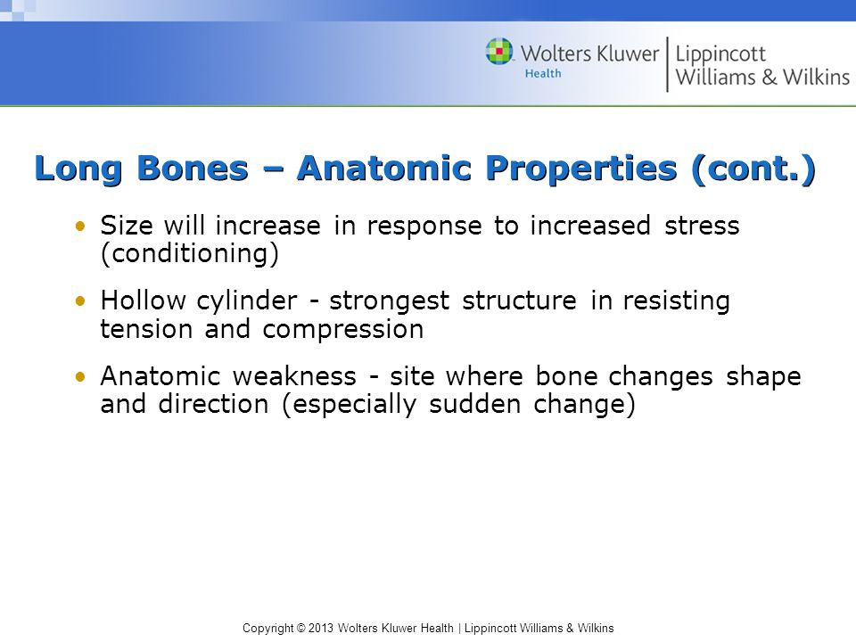 Copyright © 2013 Wolters Kluwer Health | Lippincott Williams & Wilkins Internal Composition: Long Bones – Anatomic Properties (cont.) Cortical –Compac