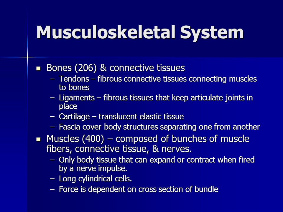 Musculoskeletal System Bones (206) & connective tissues Bones (206) & connective tissues –Tendons – fibrous connective tissues connecting muscles to bones –Ligaments – fibrous tissues that keep articulate joints in place –Cartilage – translucent elastic tissue –Fascia cover body structures separating one from another Muscles (400) – composed of bunches of muscle fibers, connective tissue, & nerves.