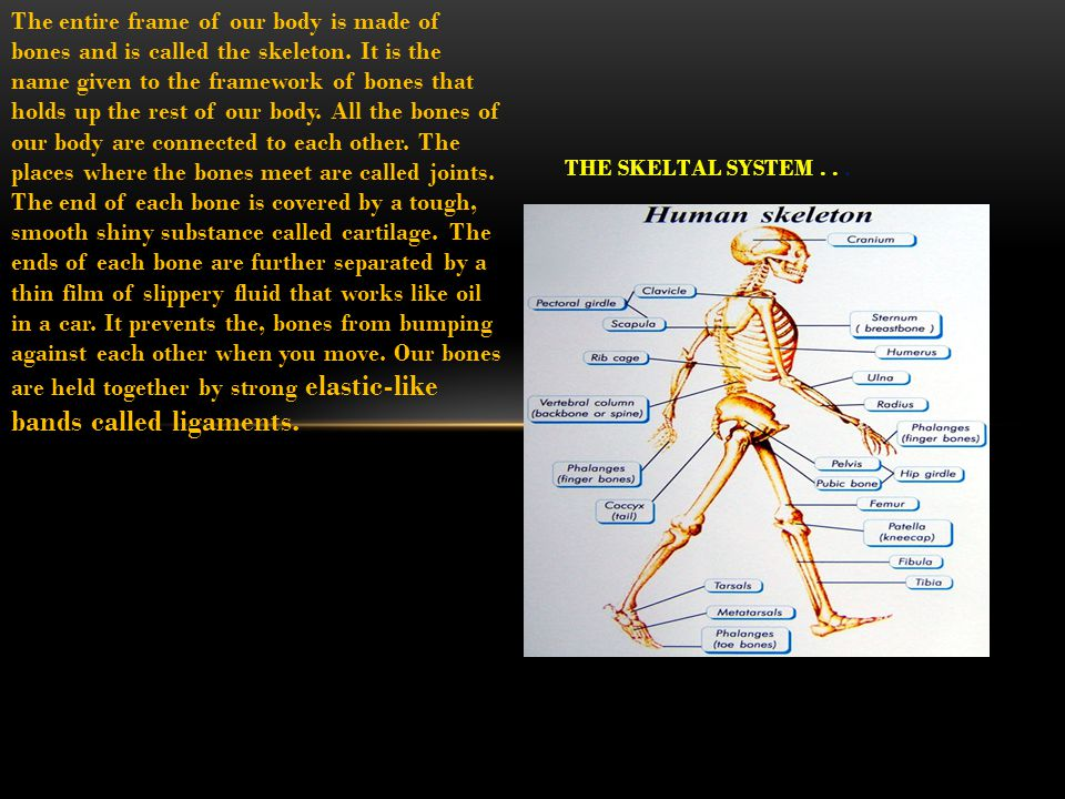 The entire frame of our body is made of bones and is called the skeleton.