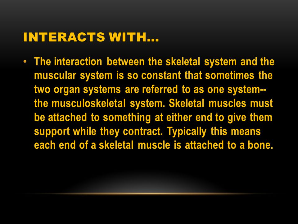 INTERACTS WITH… The interaction between the skeletal system and the muscular system is so constant that sometimes the two organ systems are referred to as one system-- the musculoskeletal system.