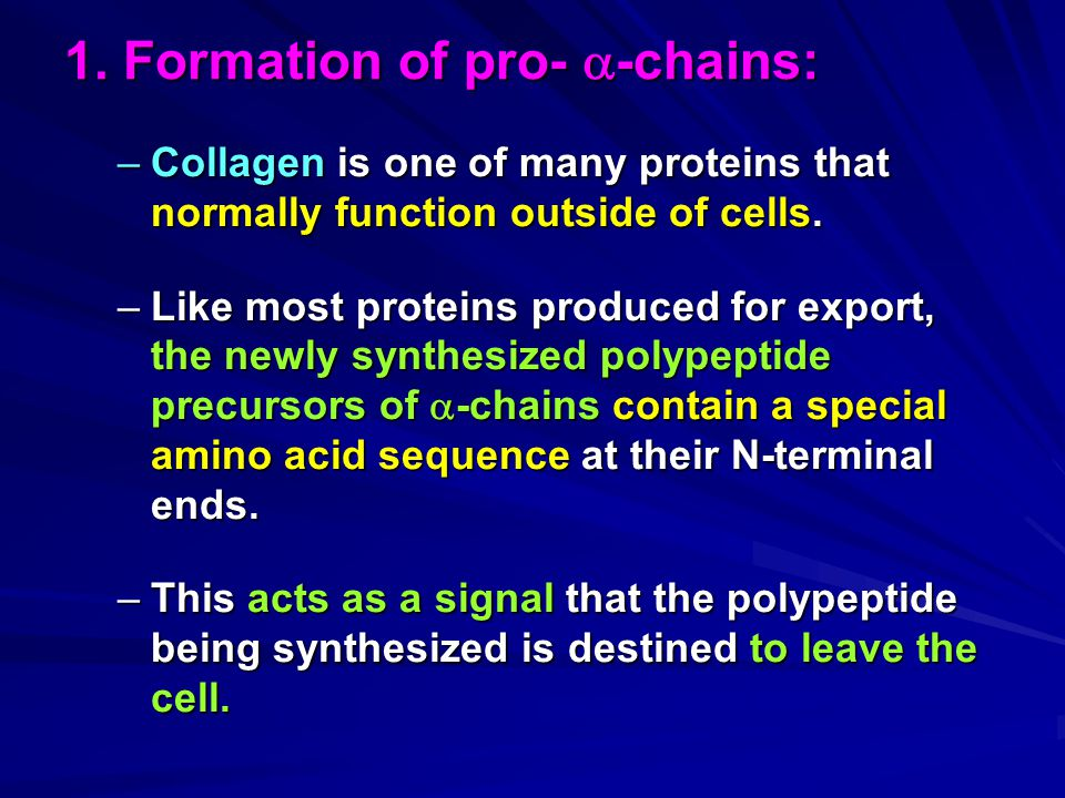 1. Formation of pro-  -chains: –Collagen is one of many proteins that normally function outside of cells. –Like most proteins produced for export, th