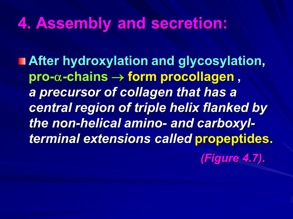 4. Assembly and secretion: After hydroxylation and glycosylation, pro-  -chains  form procollagen, a precursor of collagen that has a central region