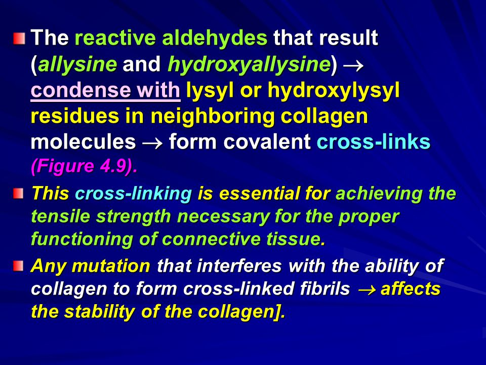 The reactive aldehydes that result (allysine and hydroxyallysine)  condense with lysyl or hydroxylysyl residues in neighboring collagen molecules  f