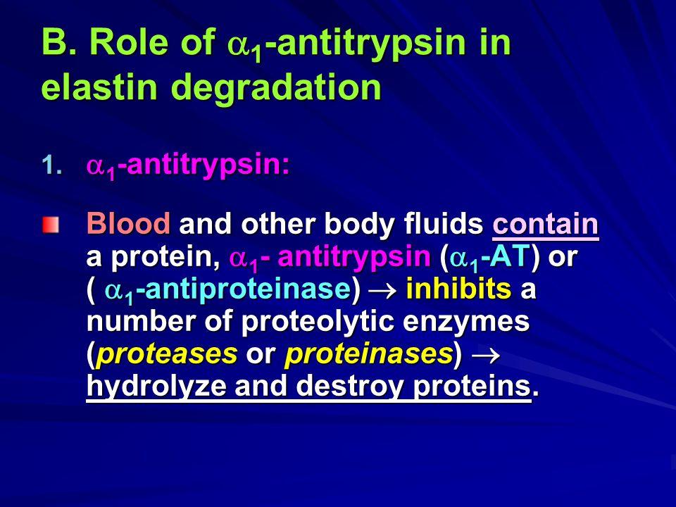 B. Role of  1 -antitrypsin in elastin degradation 1.  1 -antitrypsin: Blood and other body fluids contain a protein,  1 - antitrypsin (  1 -AT) or