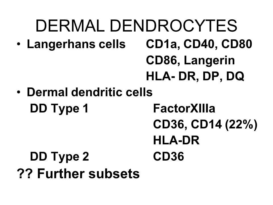 DERMAL DENDROCYTES Langerhans cells CD1a, CD40, CD80 CD86, Langerin HLA- DR, DP, DQ Dermal dendritic cells DD Type 1FactorXIIIa CD36, CD14 (22%) HLA-D