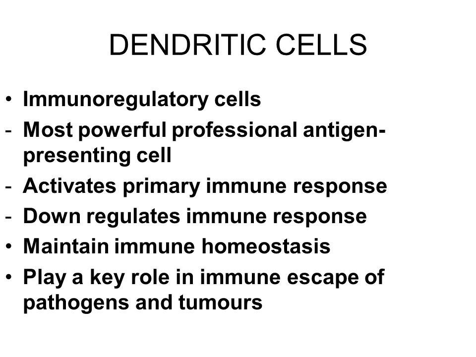 DENDRITIC CELLS Immunoregulatory cells -Most powerful professional antigen- presenting cell -Activates primary immune response -Down regulates immune response Maintain immune homeostasis Play a key role in immune escape of pathogens and tumours