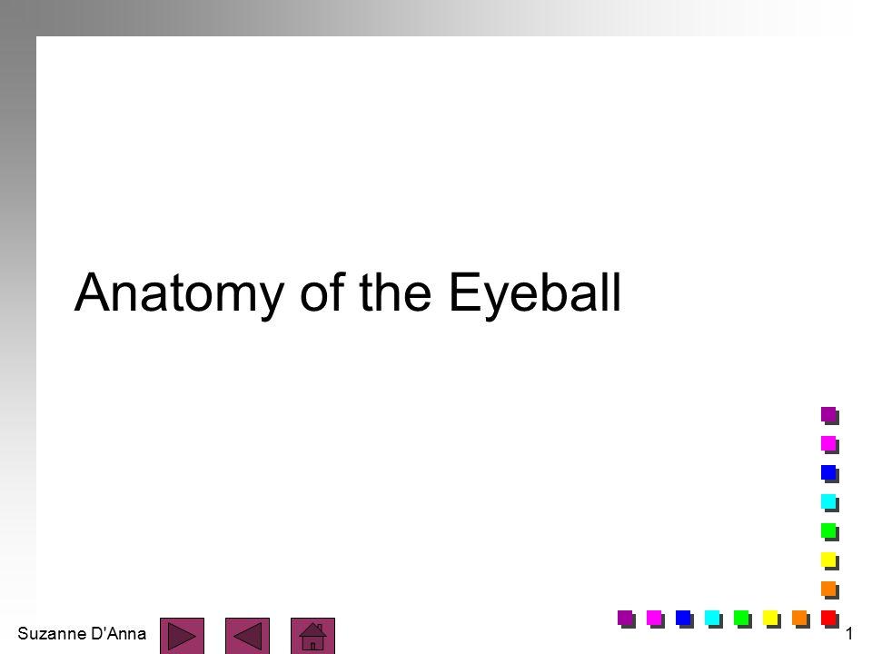 Suzanne D'Anna1 Anatomy of the Eyeball