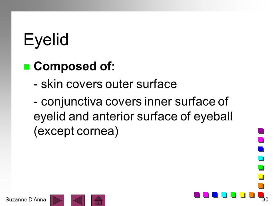 Suzanne D'Anna30 Eyelid n Composed of: - skin covers outer surface - conjunctiva covers inner surface of eyelid and anterior surface of eyeball (excep
